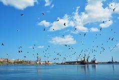 Птицы на небе, море и гавани Стоковое Изображение RF