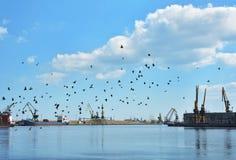Птицы на небе, море и гавани Стоковые Фото