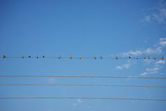 Птицы на небе провода голубом Стоковая Фотография