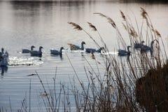 Птицы на озере Стоковые Изображения