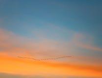 Птицы на оранжевом небе Стоковая Фотография RF