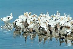 Птицы на острове de los Pajaros в Holbox Стоковые Изображения RF