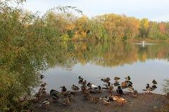 Птицы на падении Стоковые Фото