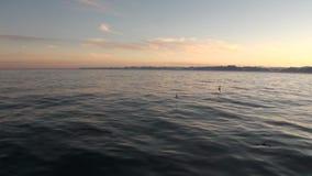 Птицы на предпосылке побережья и воды снега отделывают поверхность в Северном океане Свальбарде видеоматериал