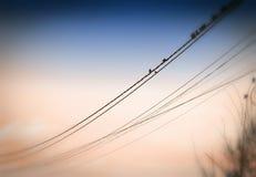 Птицы на проводах Стоковые Изображения RF