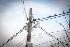 Птицы на проводах Стоковые Фотографии RF