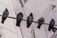 Птицы на проводе в улице турецкого городка Стоковые Фото