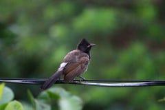 Птицы на проводе Стоковая Фотография