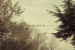 Птицы на проводе - FOG В УТРЕ Стоковое Изображение