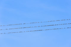 Птицы на проводах электричества Стоковое фото RF