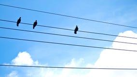 Птицы на проводах Стоковая Фотография