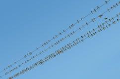 Птицы на проводах Стоковое фото RF