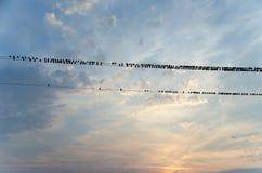 Птицы на проводах иллюстрация штока