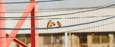 Птицы на проводе кабеля Стоковое Изображение