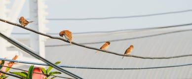 Птицы на проводе кабеля Стоковые Фото