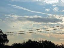 Птицы на проводе Стоковые Изображения