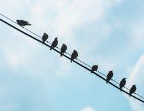 Птицы на проводе Стоковое Фото