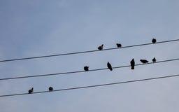 Птицы на проводе Стоковое Изображение