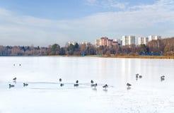 Птицы на пруде Стоковое Изображение RF