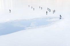 Птицы на пруде Стоковое Фото