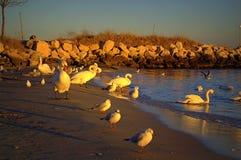 Птицы на пляже захода солнца Стоковая Фотография RF
