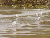 Птицы на пляже Стоковая Фотография