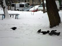 Птицы на снеге Стоковое Изображение