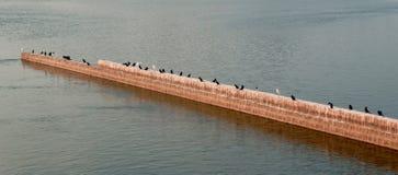 Птицы на стене реки в воде Стоковое Фото