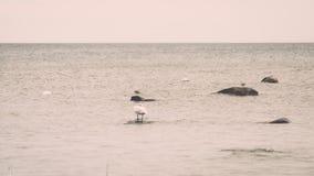 Птицы на утесах в влиянии года сбора винограда моря Стоковое Изображение RF