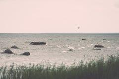Птицы на утесах в влиянии года сбора винограда моря Стоковые Фотографии RF