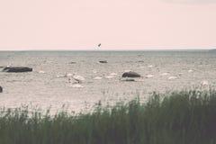 Птицы на утесах в влиянии года сбора винограда моря Стоковые Изображения RF