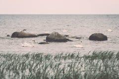 Птицы на утесах в влиянии года сбора винограда моря Стоковые Изображения