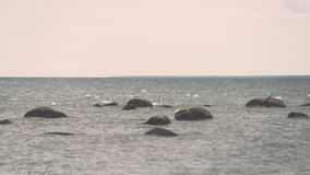Птицы на утесах в влиянии года сбора винограда моря Стоковая Фотография RF