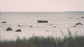 Птицы на утесах в влиянии года сбора винограда моря Стоковая Фотография