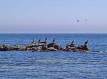 Птицы на утесах в море Стоковые Изображения