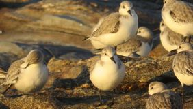 Птицы на утесах Стоковое Изображение