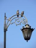 2 птицы на уличном фонаре Стоковые Изображения RF