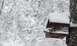 2 птицы на фидере птицы в зиме паркуют Стоковые Фотографии RF