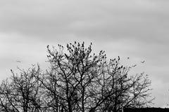 Птицы на черно-белом заходе солнца Стоковое фото RF