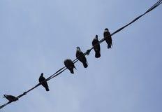 Птицы на электрических проводах Стоковые Фотографии RF