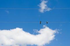 2 птицы на электрических проводах Стоковые Изображения