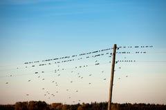 Птицы на электрическом проводе Стоковые Фотографии RF