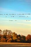 Птицы на электрическом проводе Стоковое Фото
