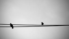Птицы на электрическом проводе Стоковая Фотография RF