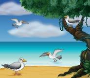 Птицы на seashore иллюстрация вектора