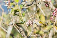 Птицы на wildflowers Стоковое Изображение RF