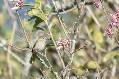Птицы на wildflowers Стоковые Фото