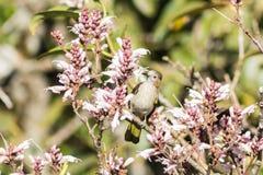 Птицы на wildflowers Стоковые Изображения RF