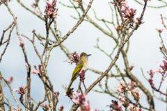 Птицы на wildflowers Стоковые Изображения