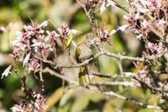 Птицы на wildflowers Стоковая Фотография